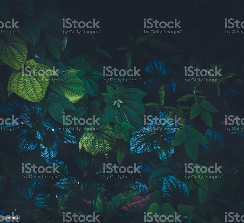 Jungle leaves background stock photo