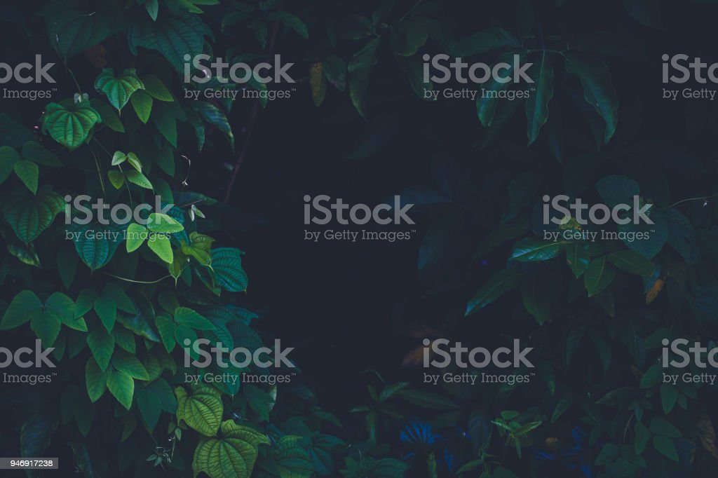 Jungle leaves background - foto stock