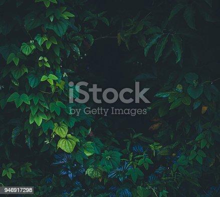 915520716istockphoto Jungle leaves background 946917298