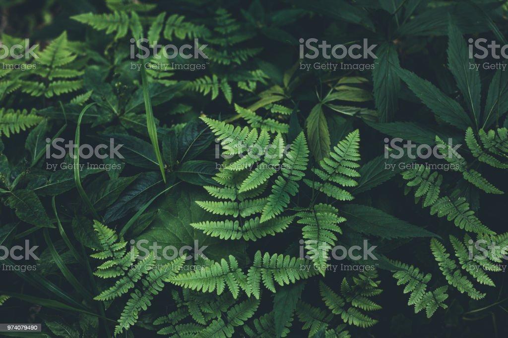 정글 단풍 배경 - 로열티 프리 0명 스톡 사진