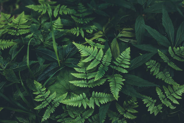 jungle leaves background - forest imagens e fotografias de stock