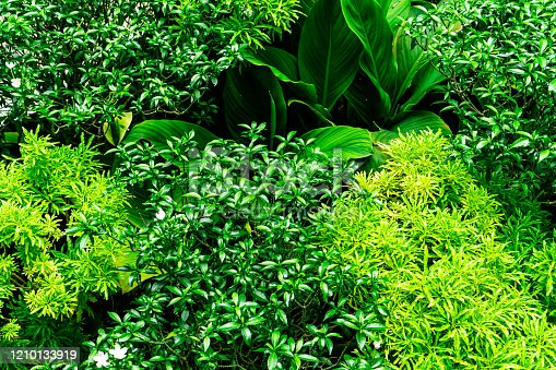 915520716 istock photo Jungle Leaves Background, Tropical Garden 1210133919