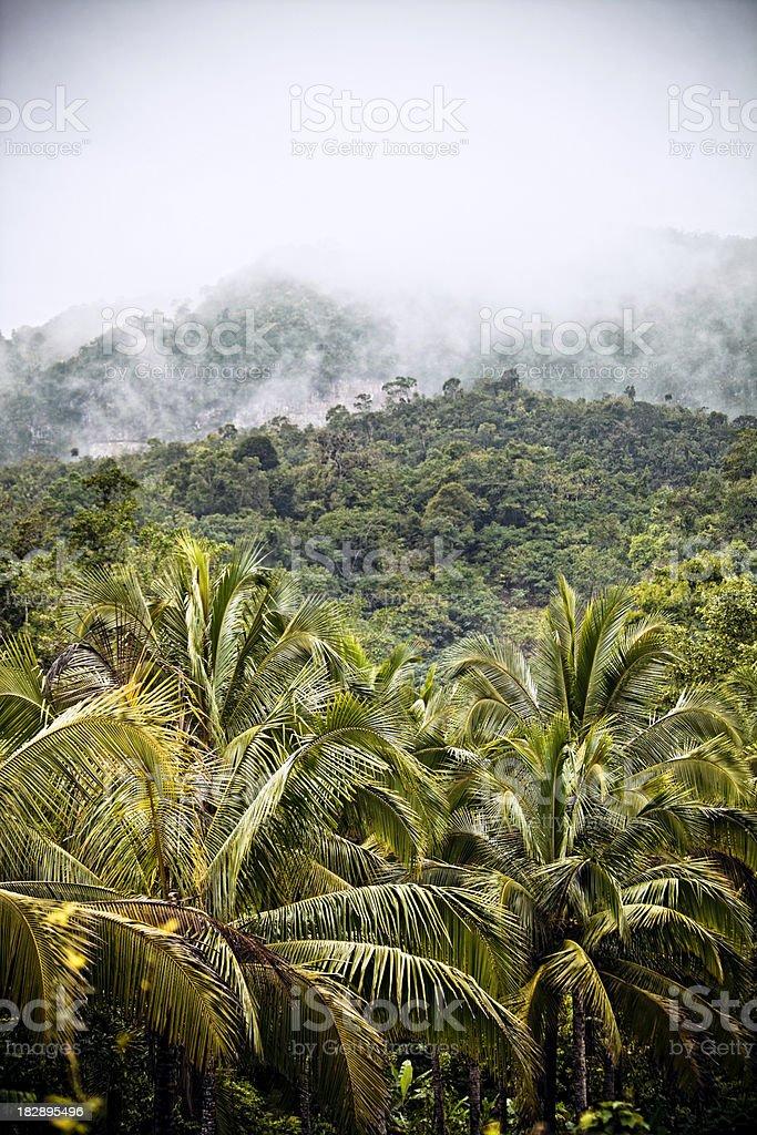 Dschungel-Gebirge – Foto