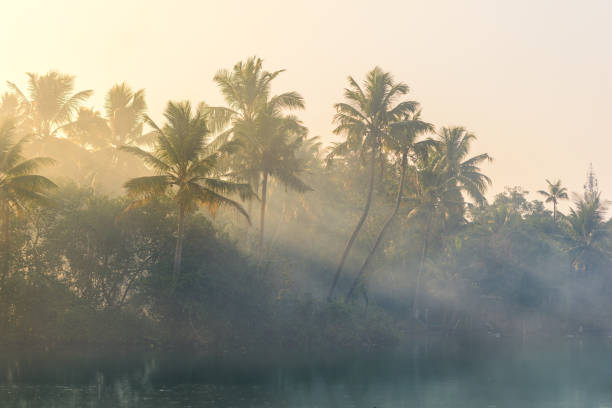 Jungle of palm trees with atmospheric haze at sunset, along a freswater lake in Eramallor's Backwaters, a popular tourist destination and yoga retreat in Kerala, India stock photo