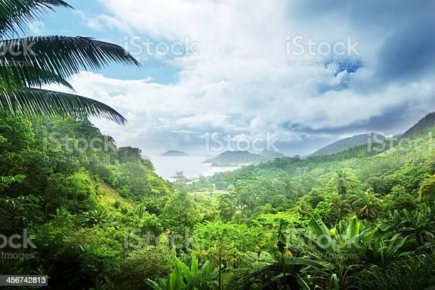 Jungle of seychelles island picture id456742813?b=1&k=6&m=456742813&s=612x612&h=3jblozarsayrkqcgfocvkjscs1megeuqiqffbipflco=
