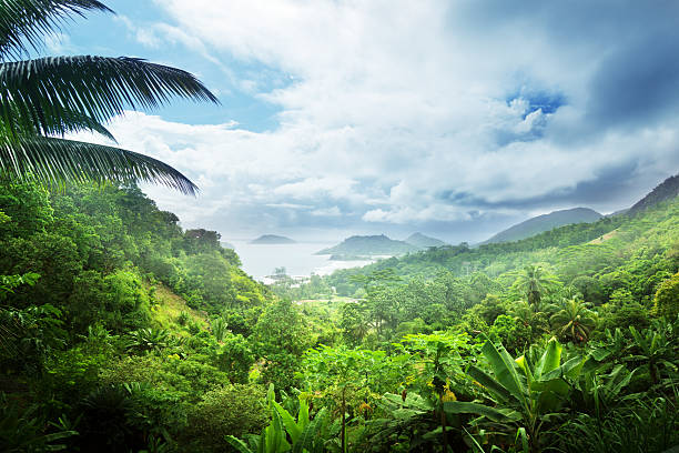 royalty free tropical rainforest pictures images and stock photos istock. Black Bedroom Furniture Sets. Home Design Ideas