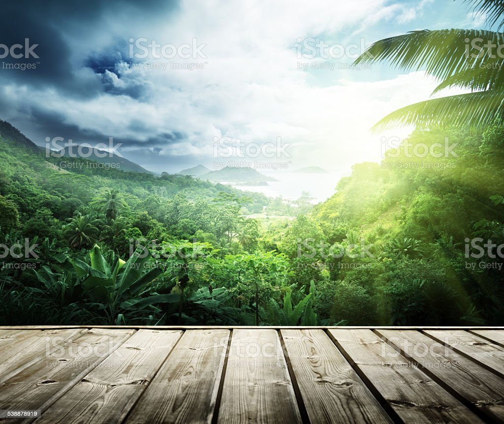 jungle of seychelles island stock photo