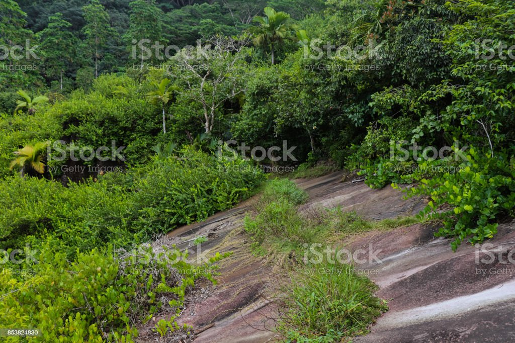 Jungle (tropical rainforest) of the northern part of Mahe island at the foot of Jasmin mountain. Seychelles islands. Eastern Africa stock photo