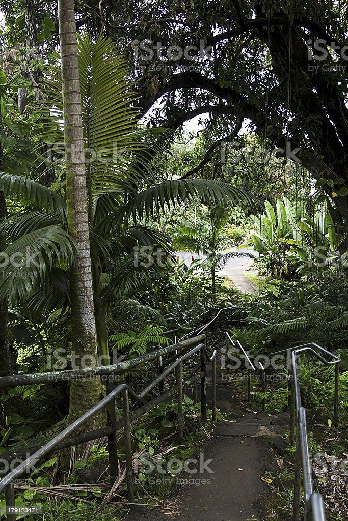 Jungle park royalty-free stock photo