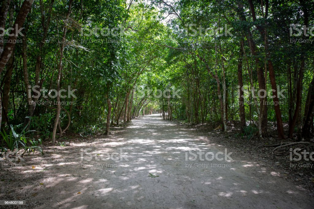 Jungle path in Mexico royalty-free stock photo