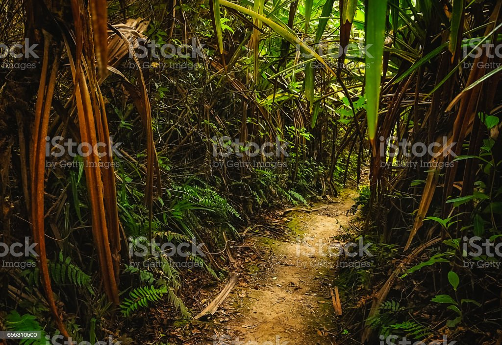 Jungle path in Sumatra stock photo