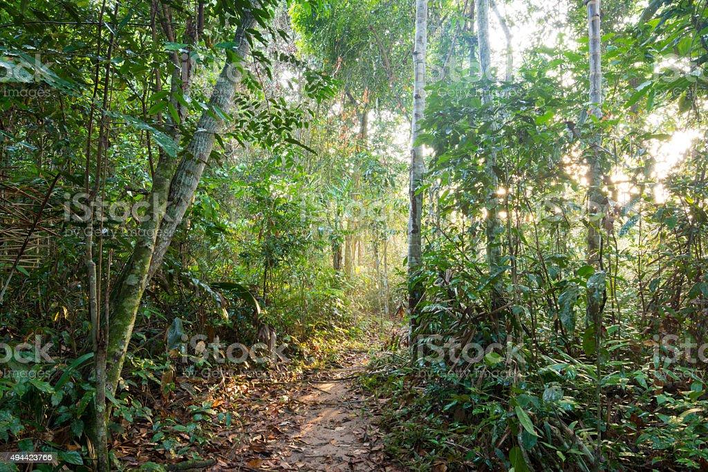 Trilha na selva em manhã leve - foto de acervo