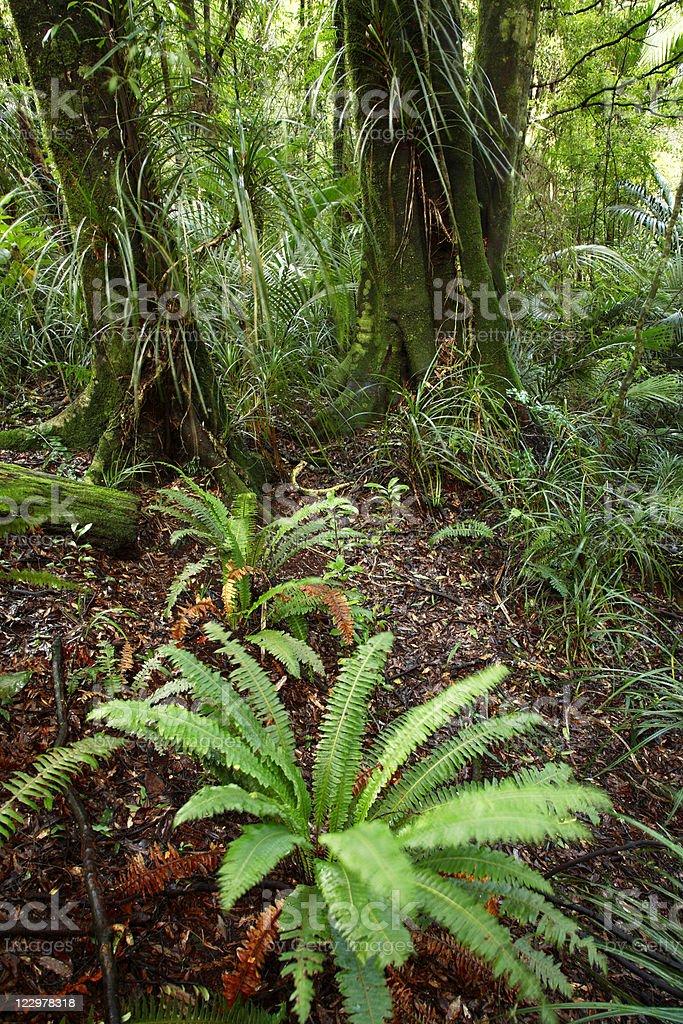 Jungle royalty-free stock photo