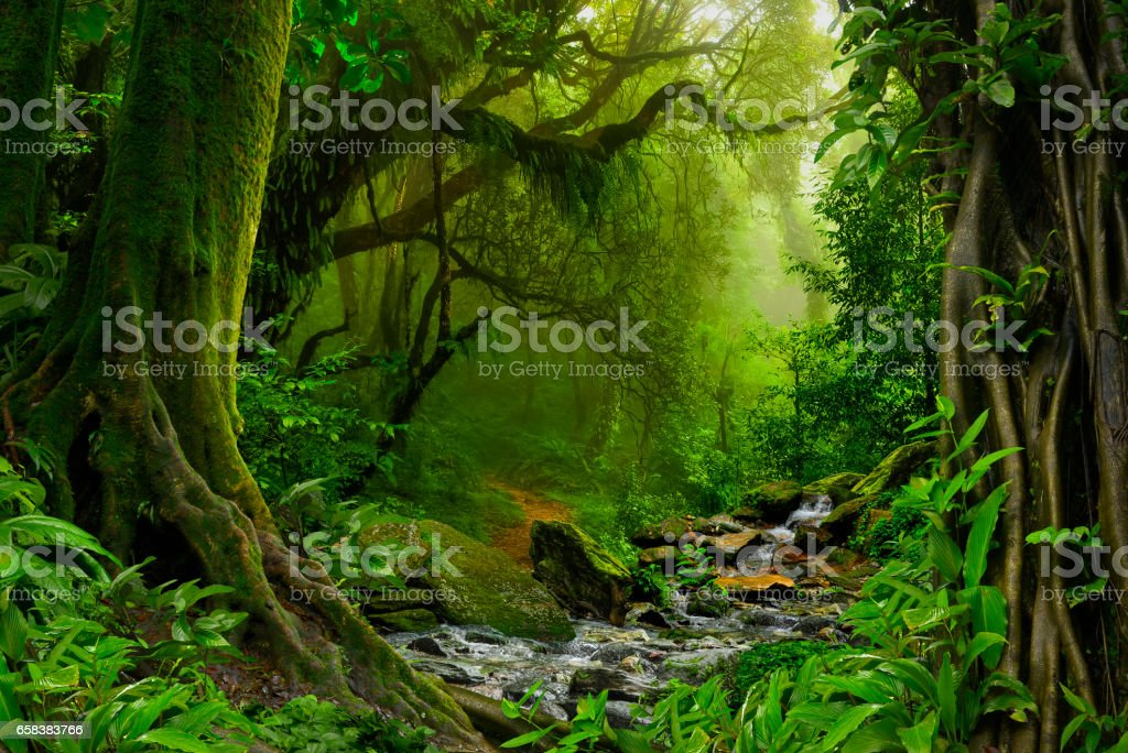 Jungle - foto stock