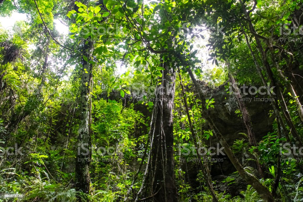 jungle stock photo