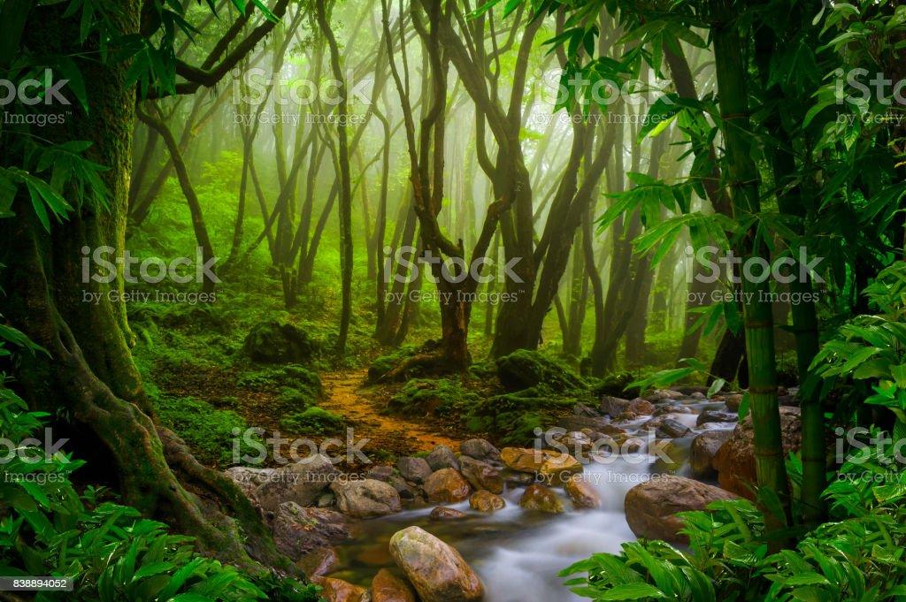 Jungle – zdjęcie