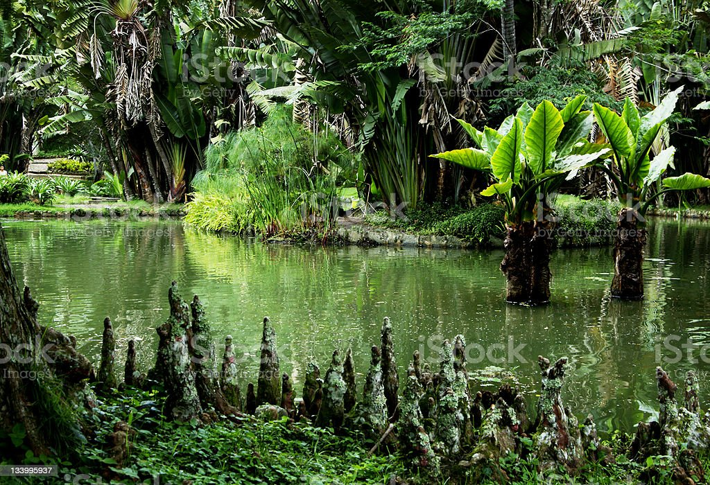 Jungle pond Brazil royalty-free stock photo