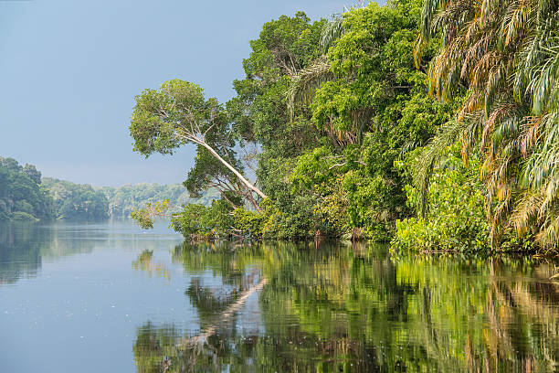 jungle river in africa  and it´s shoreline - democratic republic of the congo stock photos and pictures
