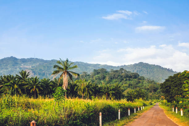 Jungle road - Togo, West Africa stock photo