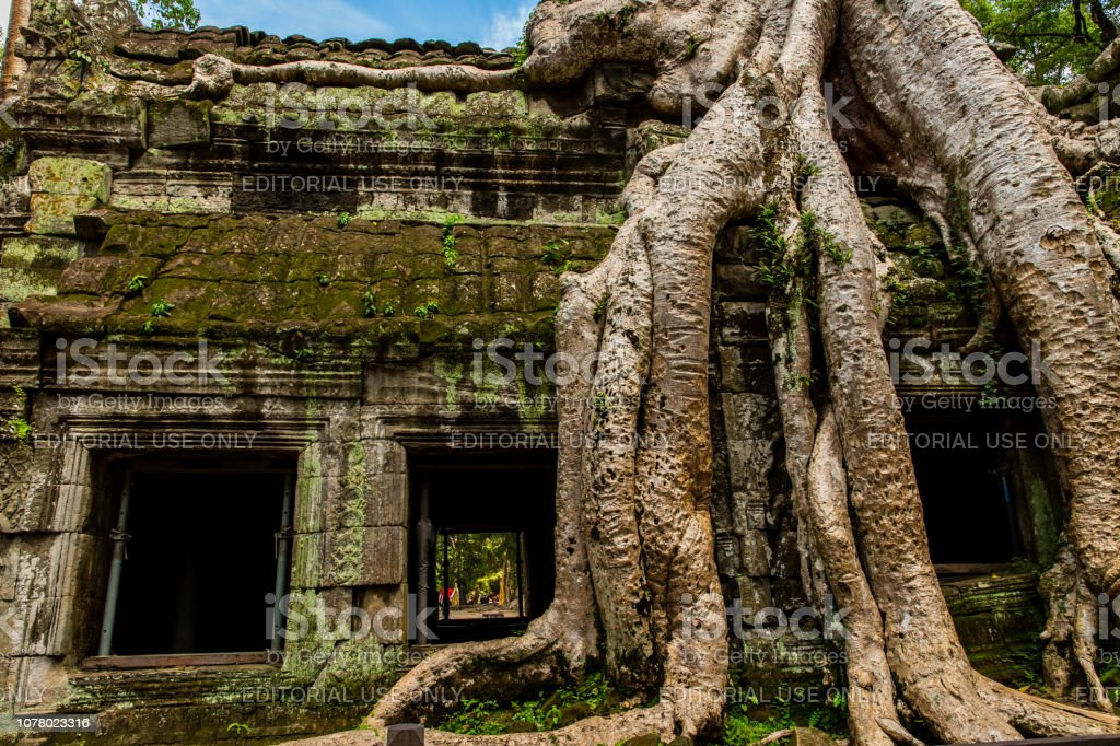 Jungle Roots at Ta Prohm stock photo