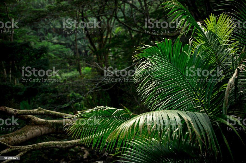 Jungle Scene stock photo