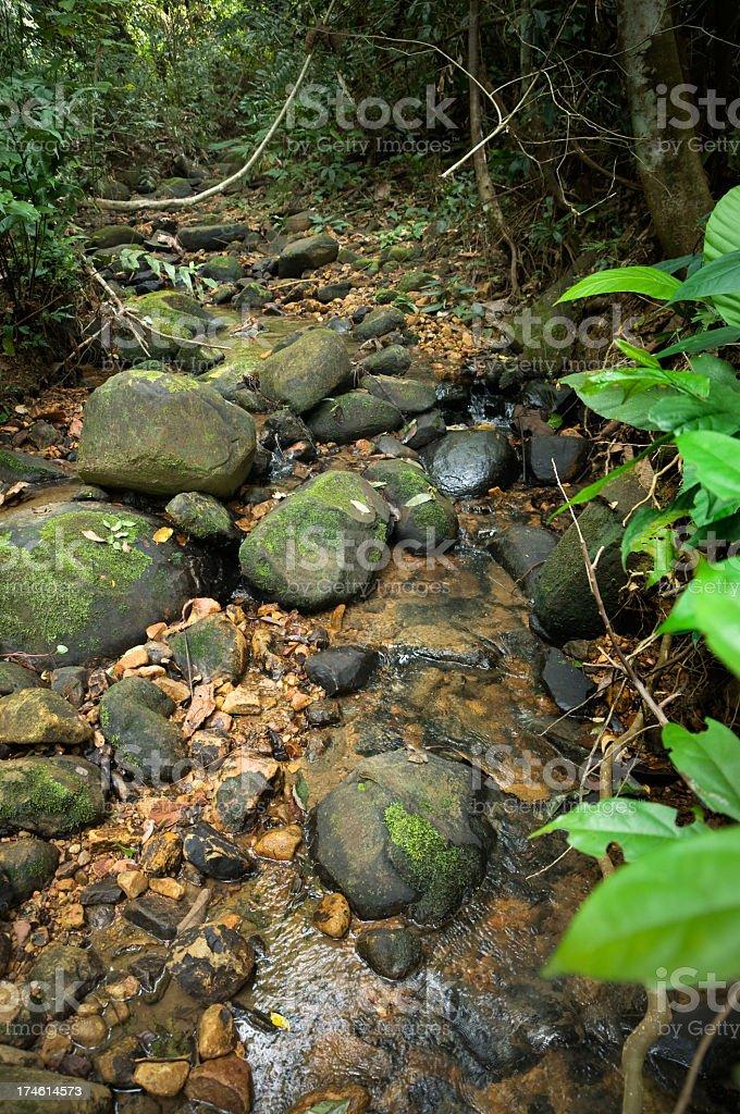 Jungle Stream stock photo