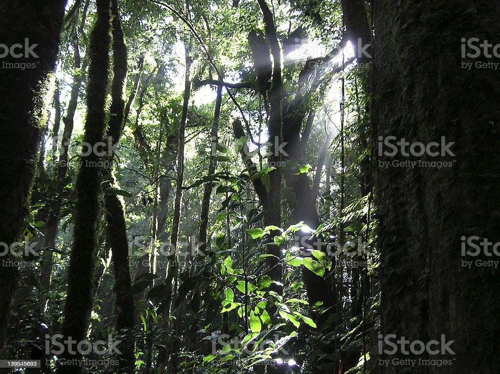 Jungle Sun royalty-free stock photo