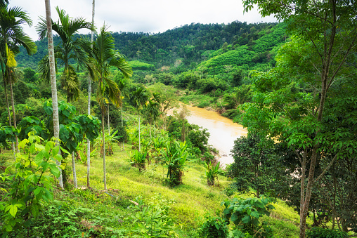 Jungle Thailand