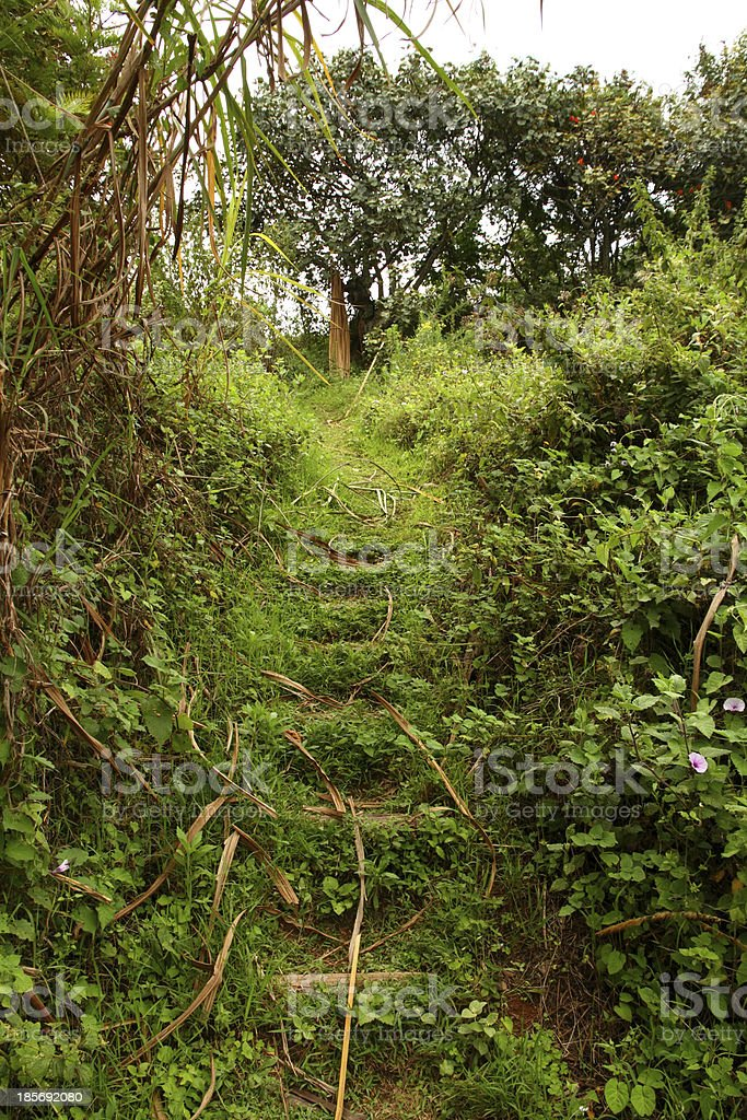 Jungle Trail Hillside Steps royalty-free stock photo