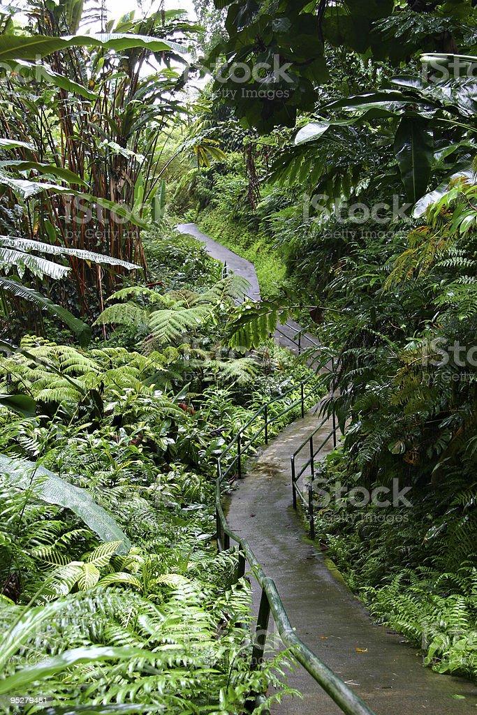 Jungle Trail or Path Winding Through Lush Foliage, Hawaii stock photo