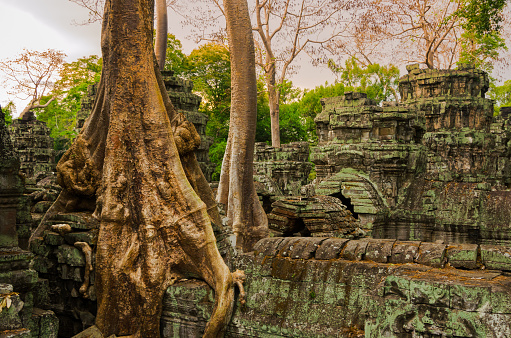 istock Jungle trees have overgrown the rooftops of Ta Phrom temple in Angkor, Cambodia. 1013125998