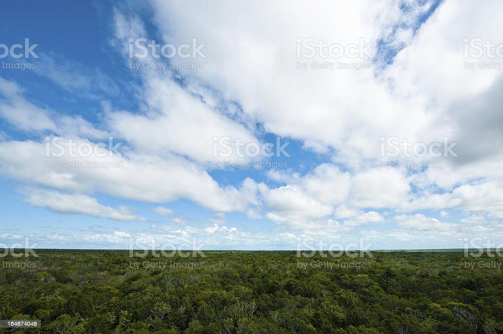 jungle treetops royalty-free stock photo