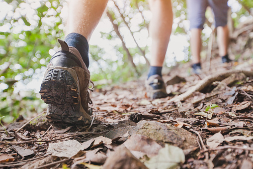 istock jungle trekking, group of hikers backpackers walking together outdoors 638471776