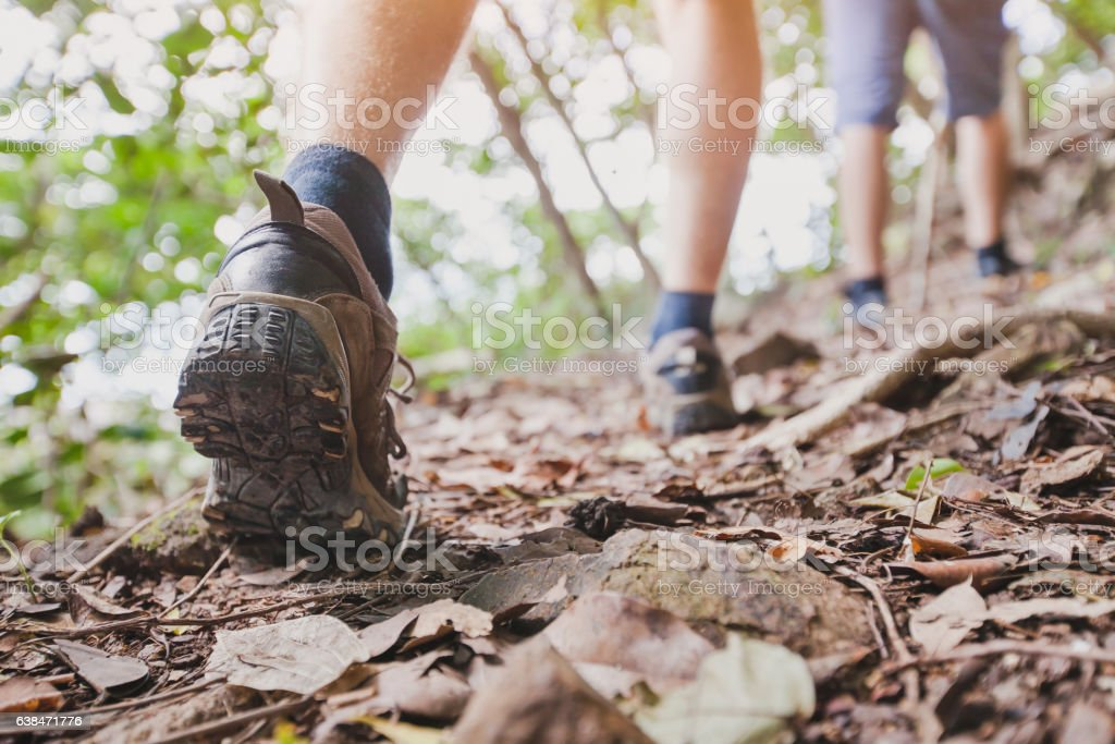jungle trekking, group of hikers backpackers walking together outdoors stock photo