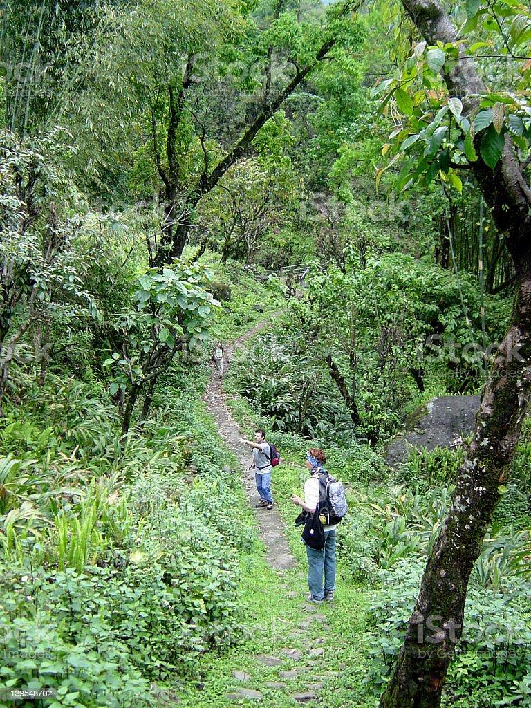 Jungle walk royalty-free stock photo