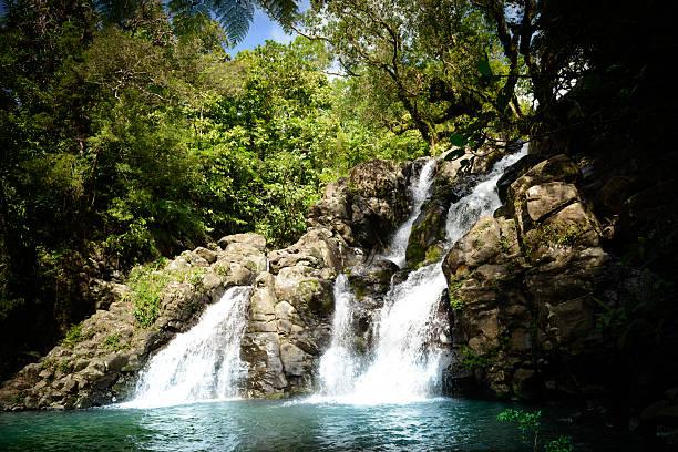 Dschungel-Wasserfall – Foto