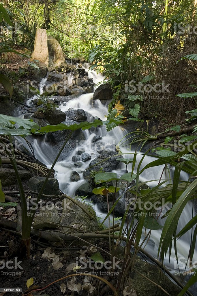 Jungle Waterfall royalty-free stock photo