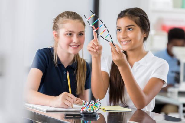 chicas de secundaria estudian modelo de hélice de adn - hélice forma geométrica fotografías e imágenes de stock