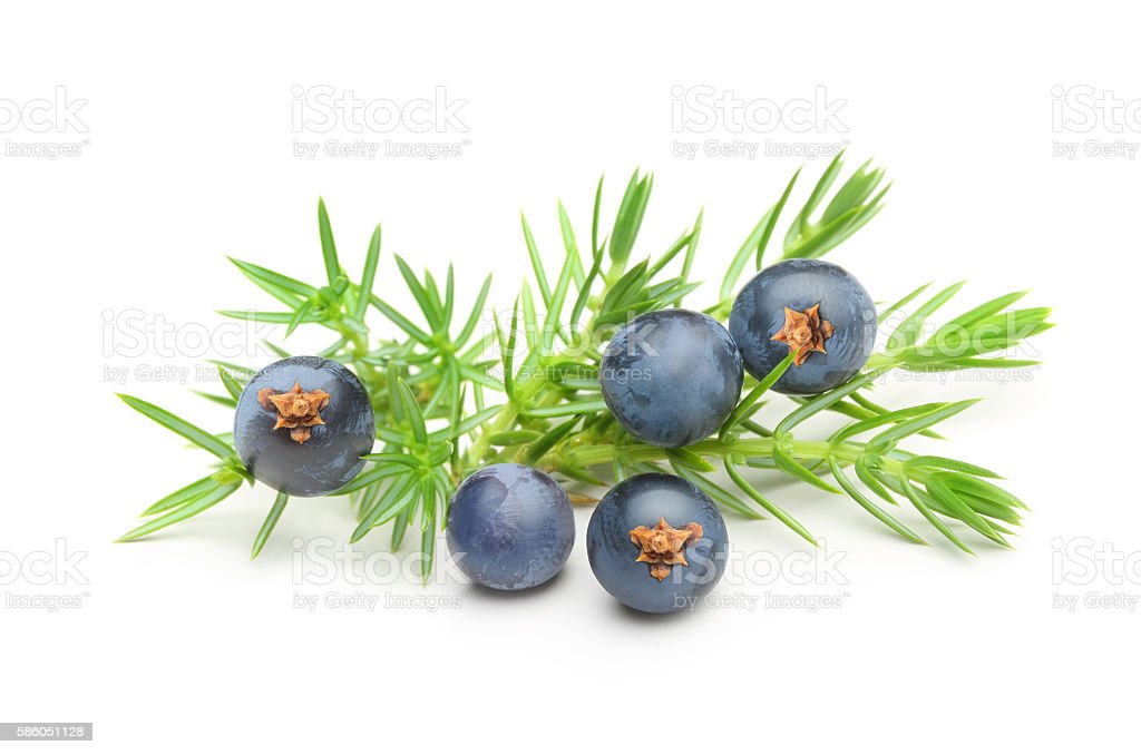 Juniper berries isolated stock photo