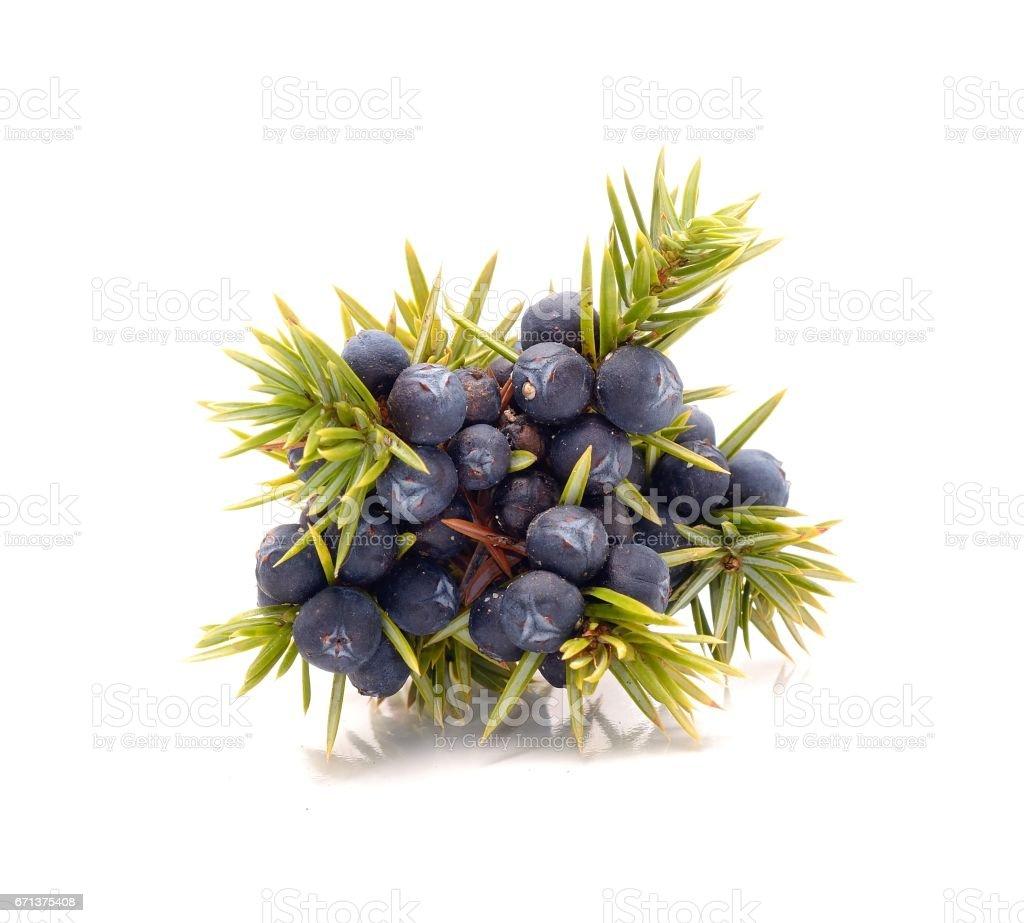 Frutas silvestres - foto de acervo