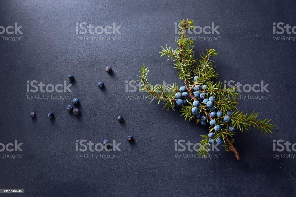 Zimbro filial com frutas vermelhas - foto de acervo
