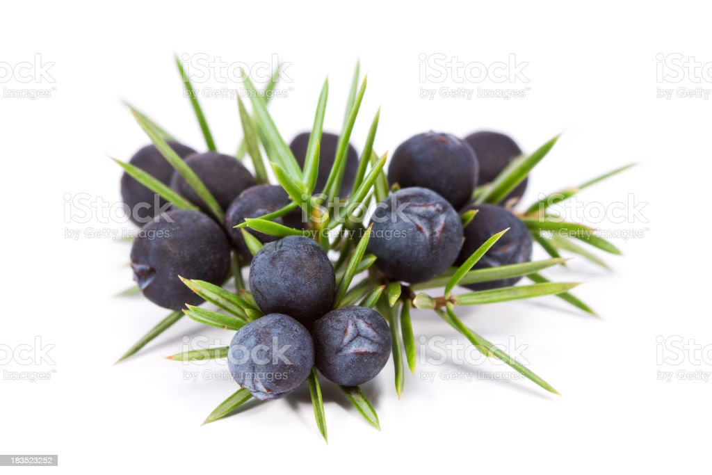 Juniper fruit on a white background stock photo