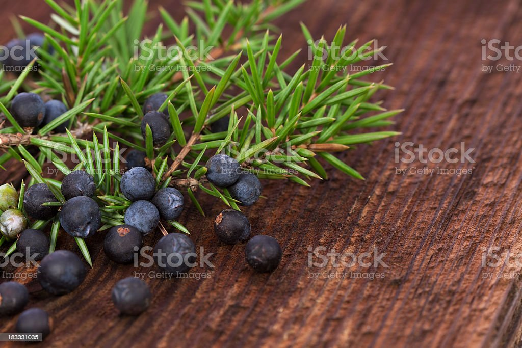 Juniper Herbal berry stock photo