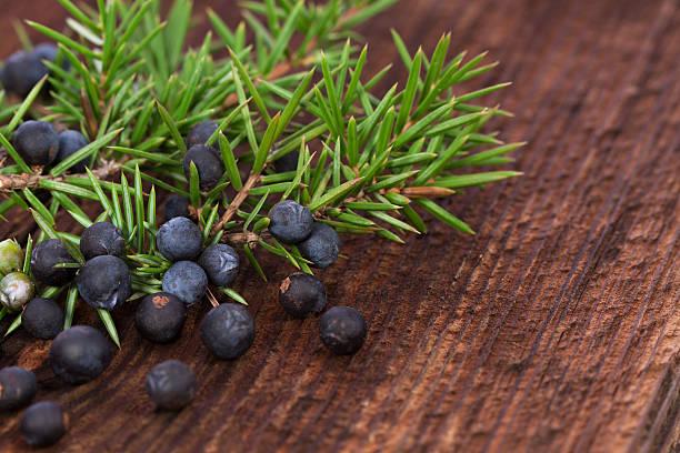 Enebro de hierbas berry - foto de stock