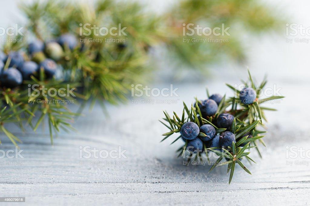 Juniper - foto de stock