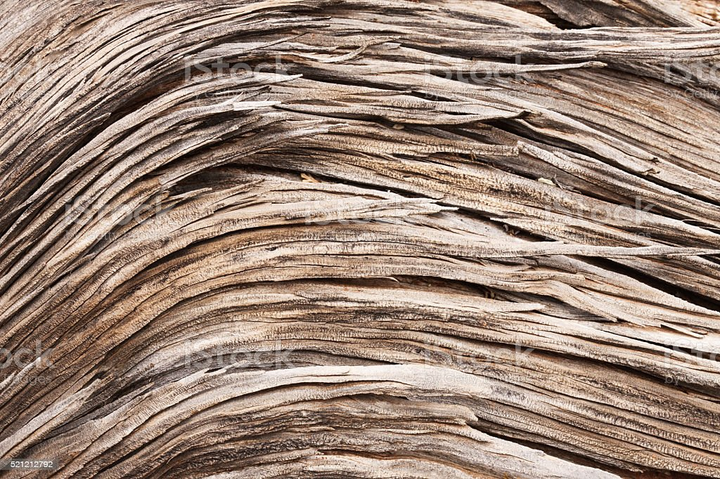 Juniper Wood Grain Dead Tree Texture stock photo