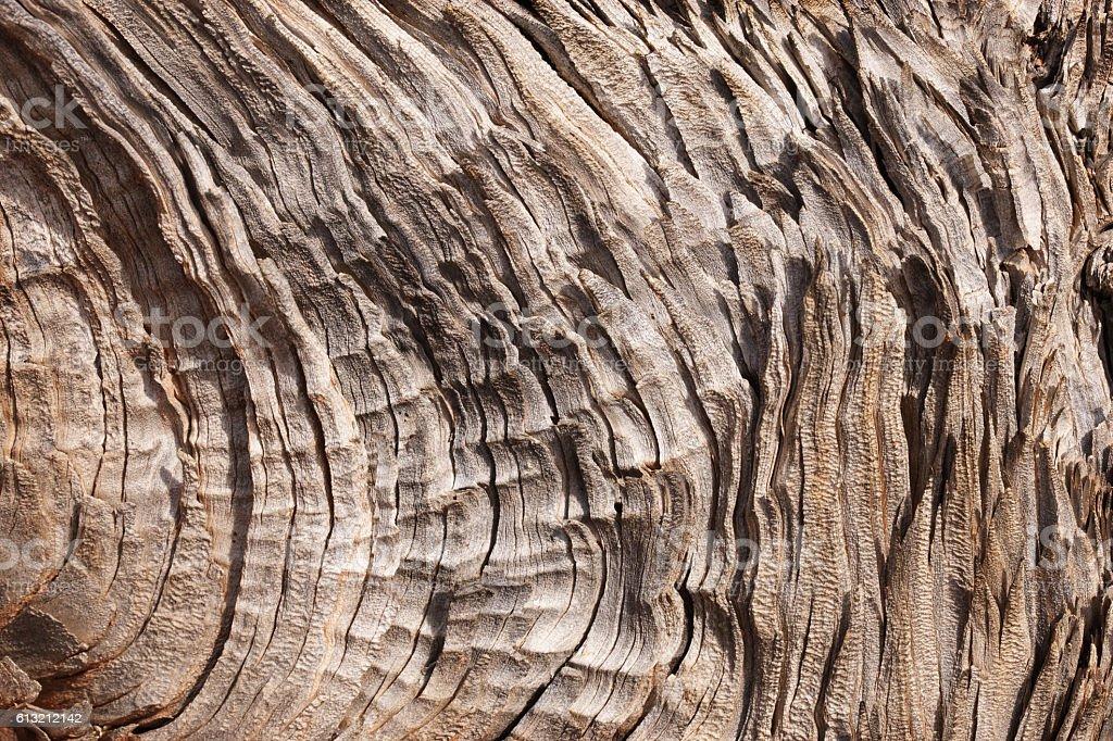 Juniper Woodgrain Dead Tree Texture stock photo