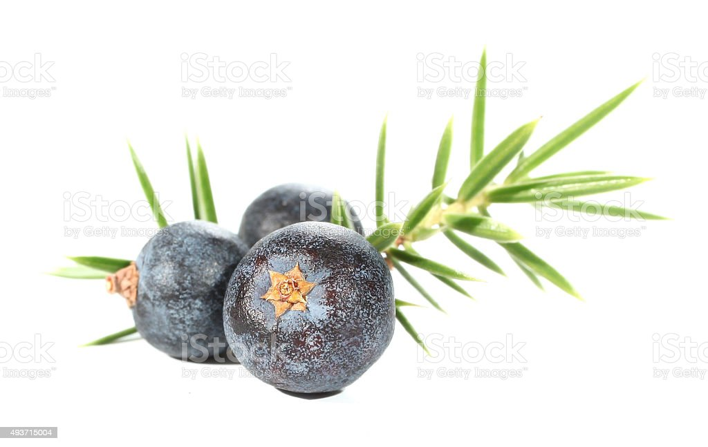 Juniperus berries stock photo