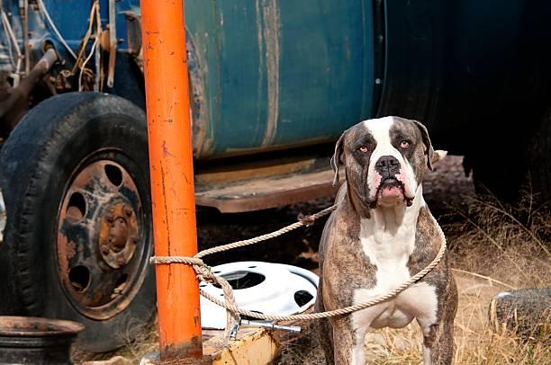 Junk Yard Dog stock photo