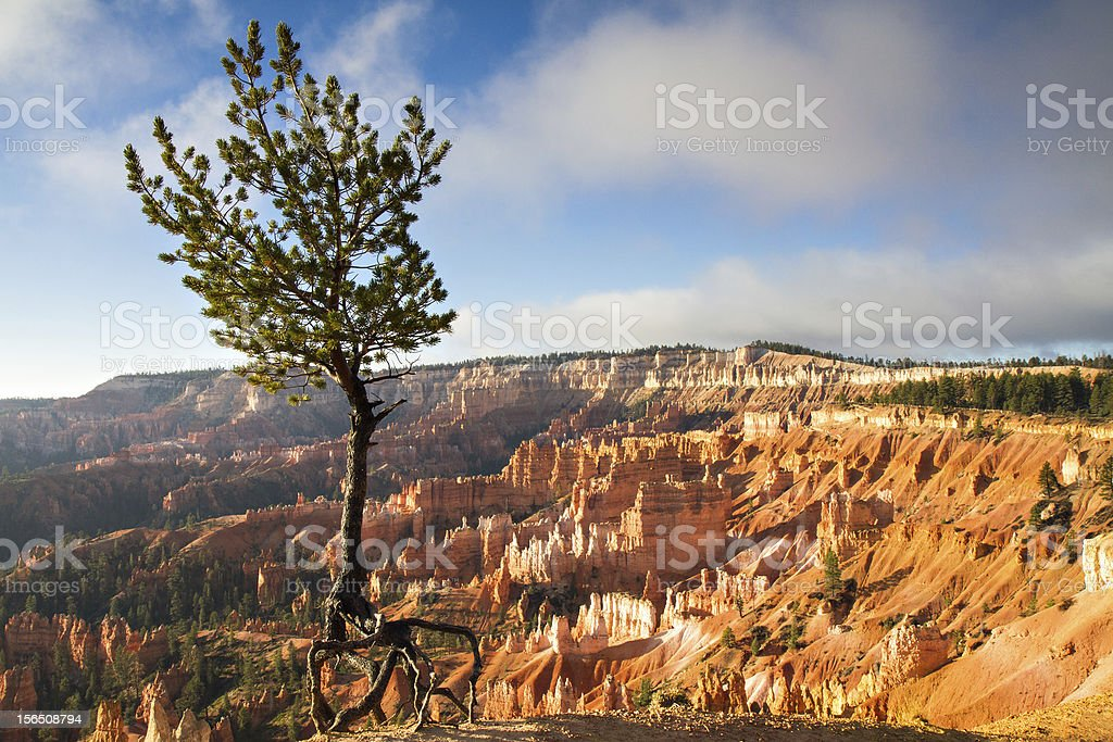 Jupiter Pine Tree at Bryce Canyon stock photo